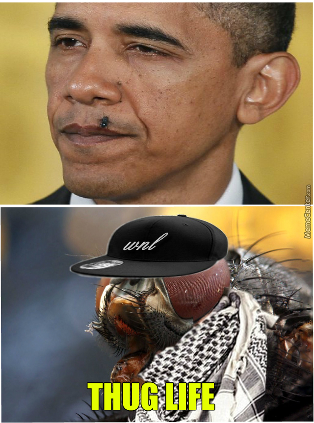 Badass Fly Dosen't Give A Shit