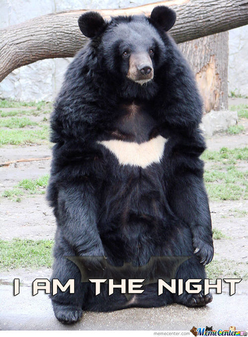 Batman Bear