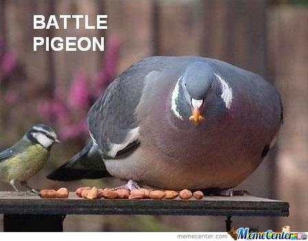 Battle Pigeon