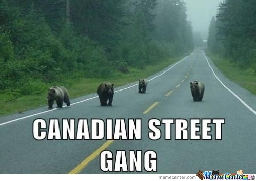 Bears On The Street Are Called
