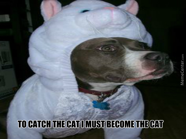 Become The Cat