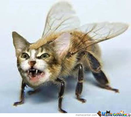 Behold The Terror Of Catbee
