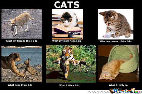 Being A Cats