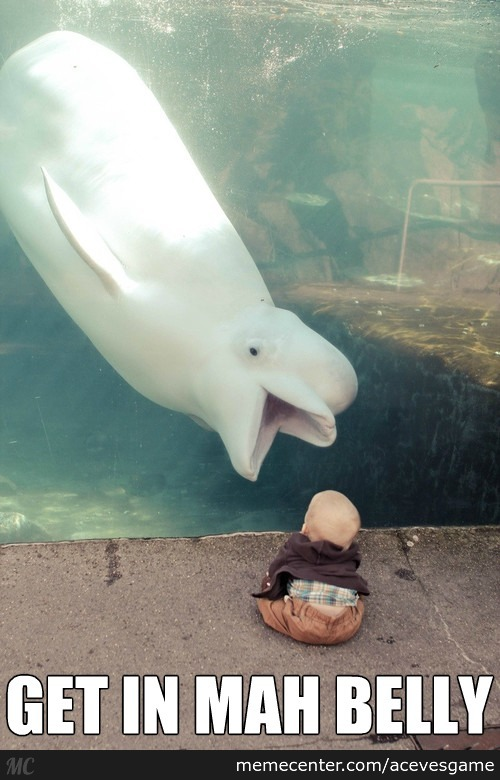 Beluga Whale Finds A Baby Appetizing