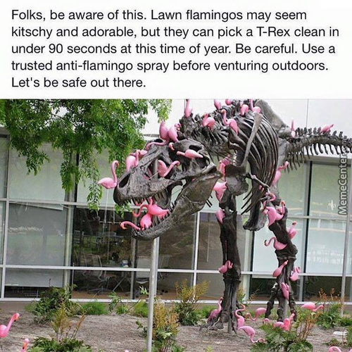 Beware Of The Flamingo