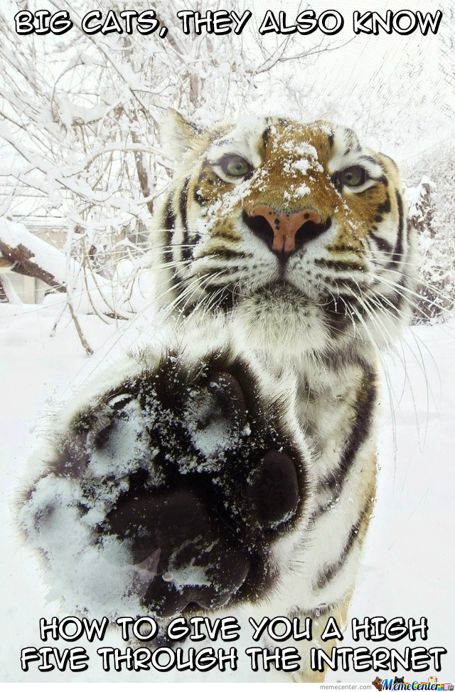 Big Cats... They're Awesome!