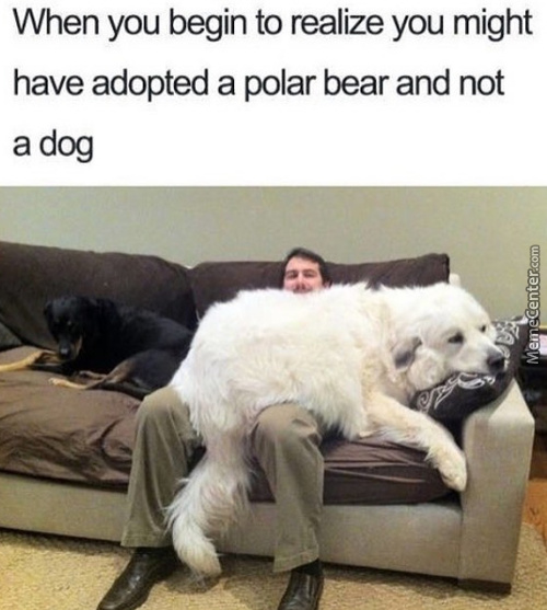 Big Doggo