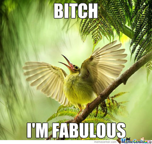 Bird Is Fabulous!