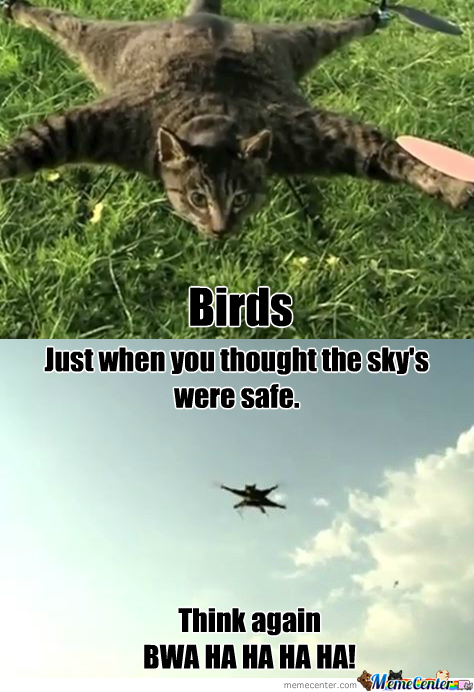 Birds The Sky's Are No Longer Safe!