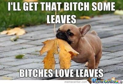 Bitches And Their Leaves