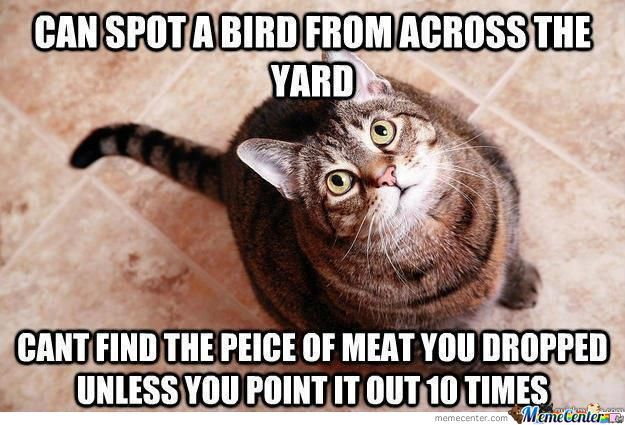 Bloody Cats,