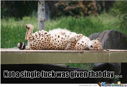 bored cheetah