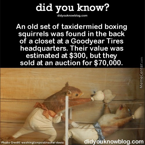 Boxing Squirrels