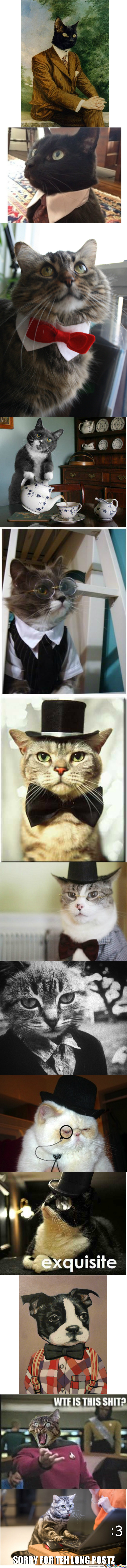 Brace Yourselves, The Fancy Cats Are Coming