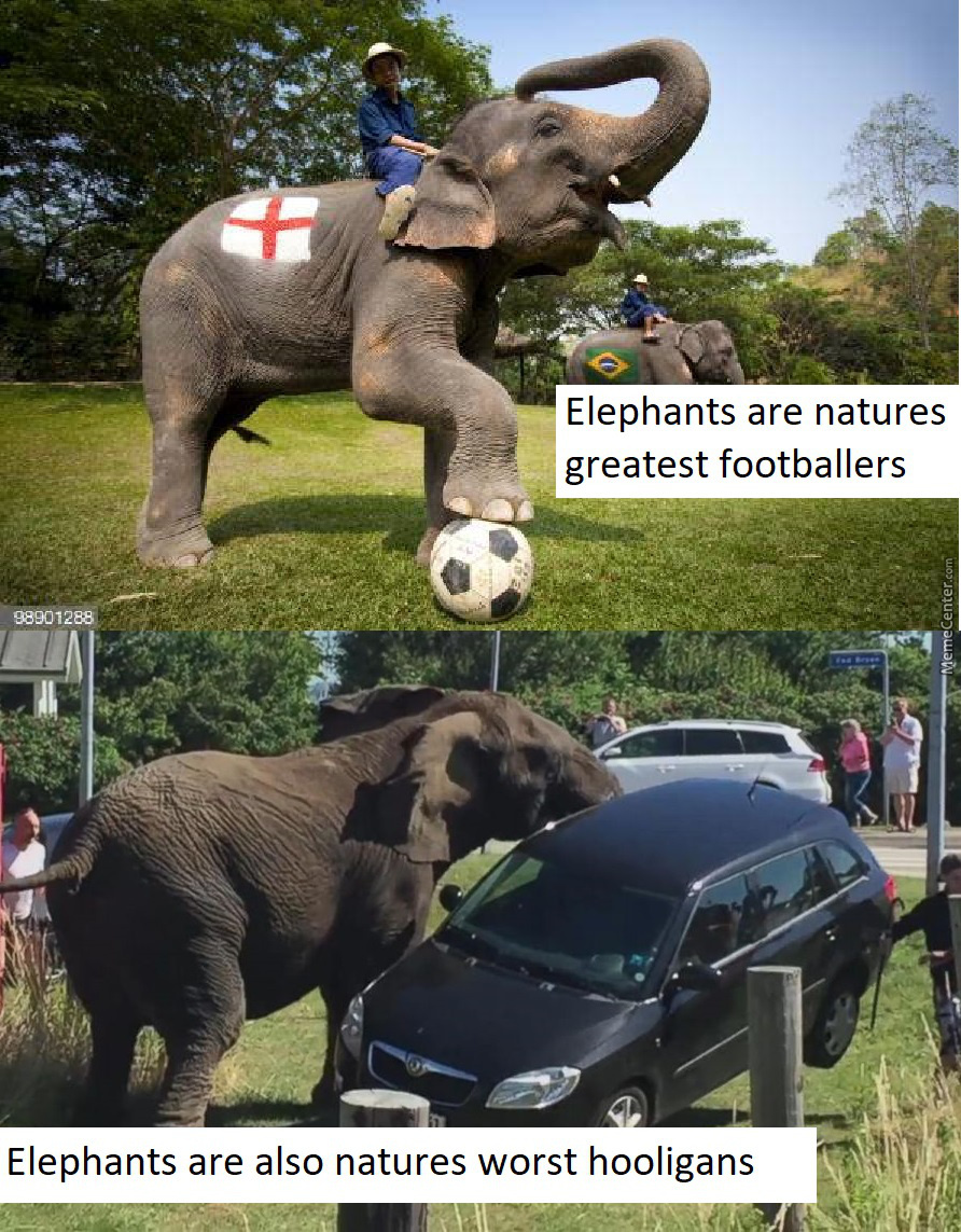 Brand New Meme: Elephant Hooliganism