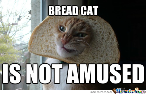 Not Funny Cat Meme : Bread cat is not amused by entermask meme center