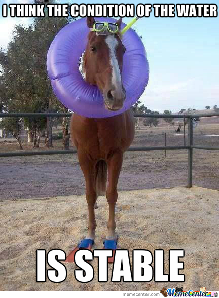 Bring All The 'horse' To Beach