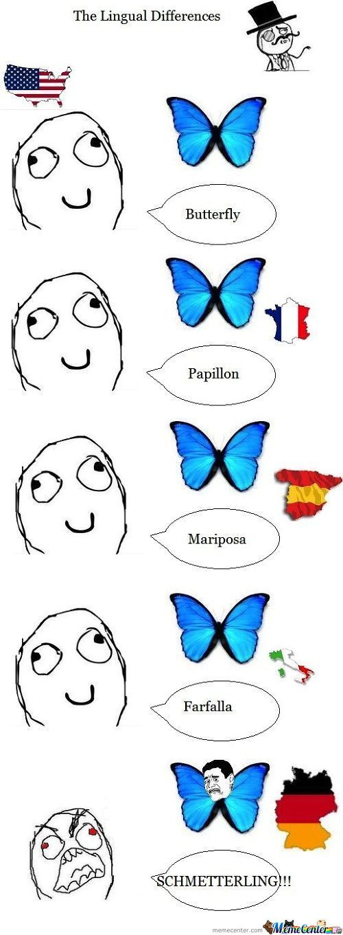 Butterfly Name