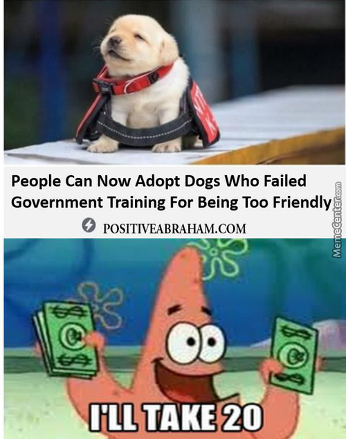 Calm Down Patrick They Are Free, You Don'T Need To Spend Money