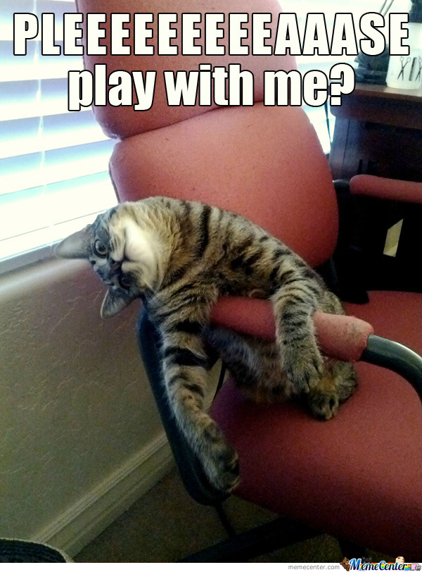 Cat After Play Diablo 3