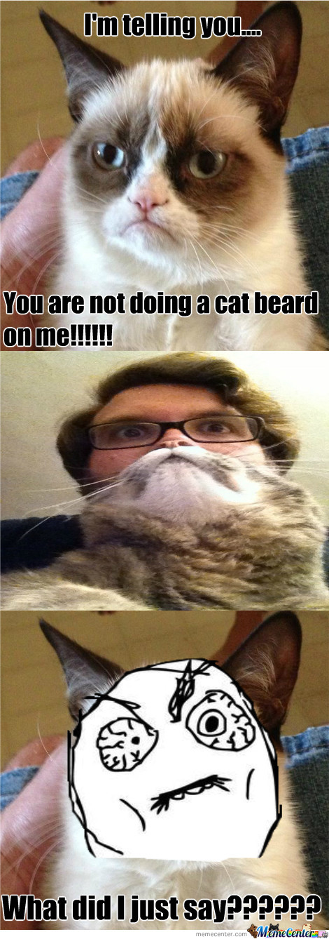 cat beard_o_1526609 cat beard by metalchick meme center