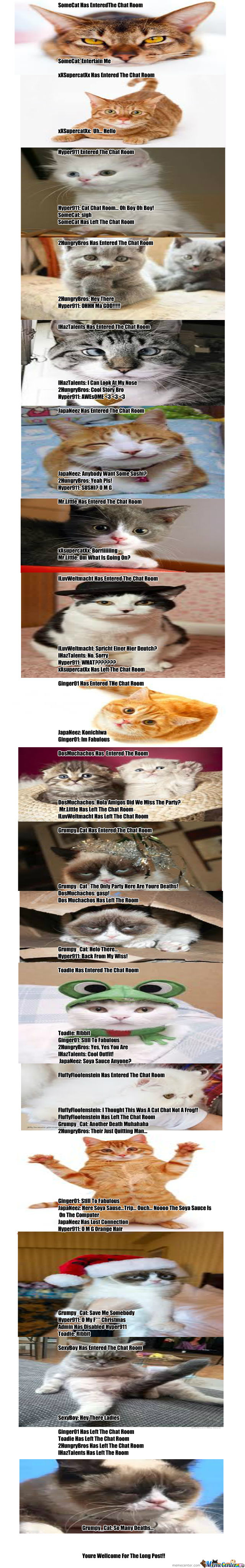 Cat Chat Rooms