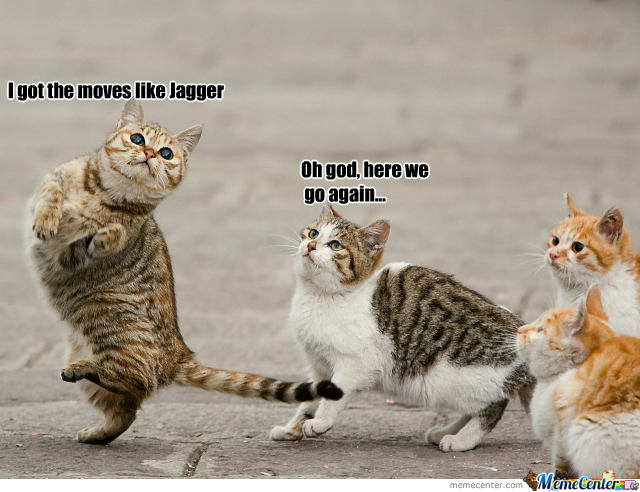 Random Danceing Cat Meme