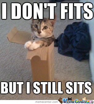 Cat Does Not Fit But Still Sit