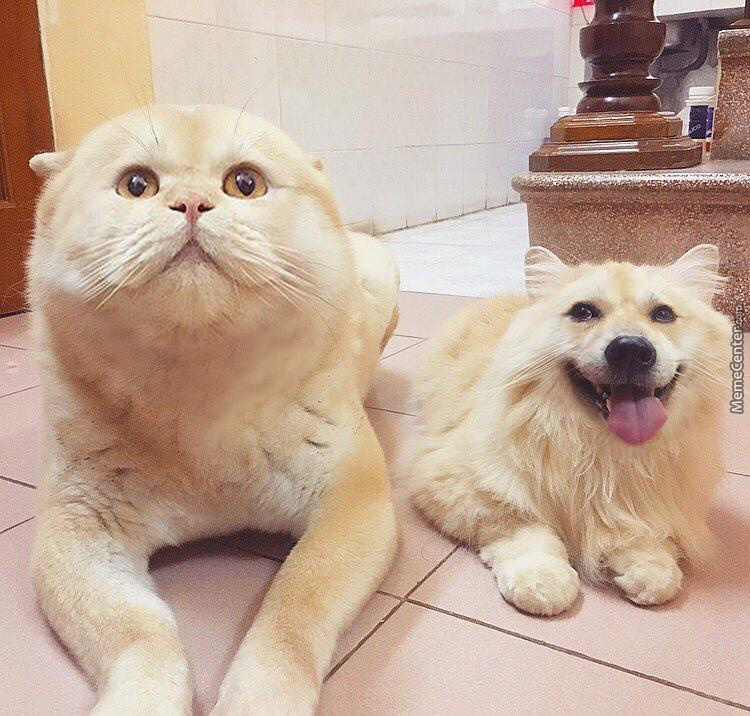 Cat Dog Faceswap