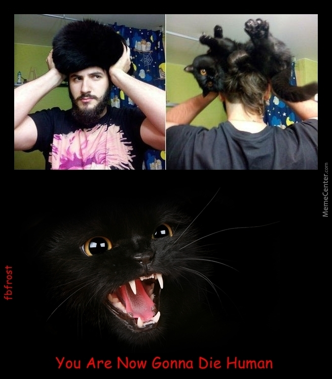 Cat Hair Wig New Fashoin Trend...