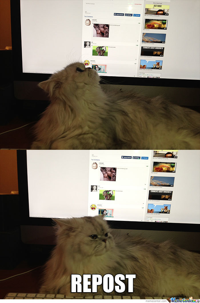 Cat Is Not Amused With Content