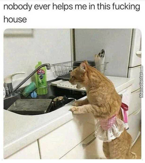 Cat Maids Are Not Cat Slaves