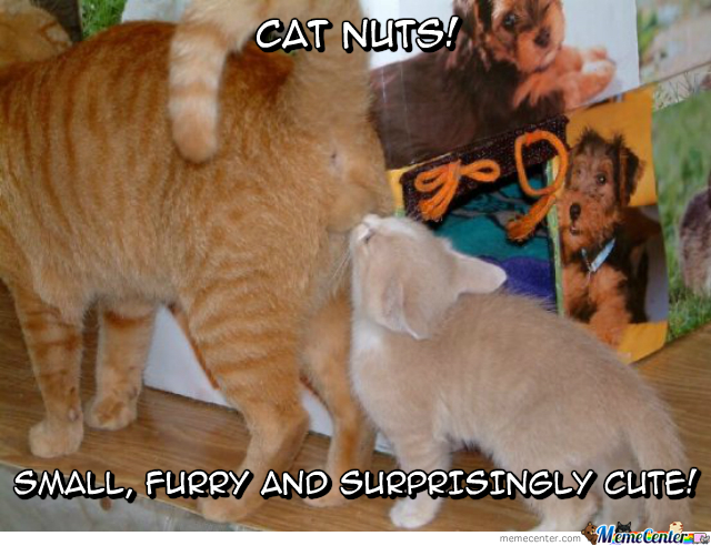Cat nuts by ifreet meme center cat nuts publicscrutiny Image collections
