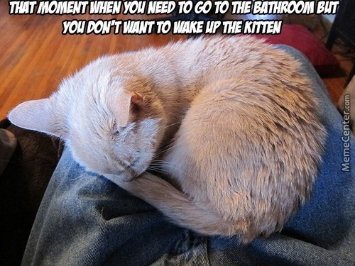 Cat Owners Know That Feel
