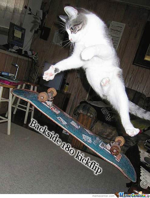 cat played w/ skateboard again