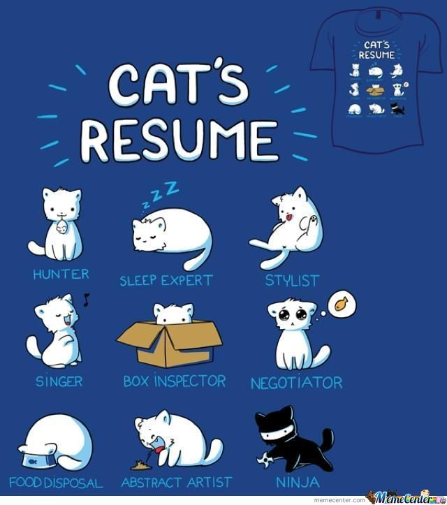 cat resume by qwevictor