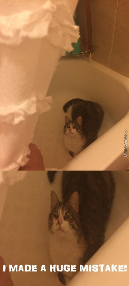 Cat Rule No.2314 Never Play In The Tub If The Your Owner Is Still In The House