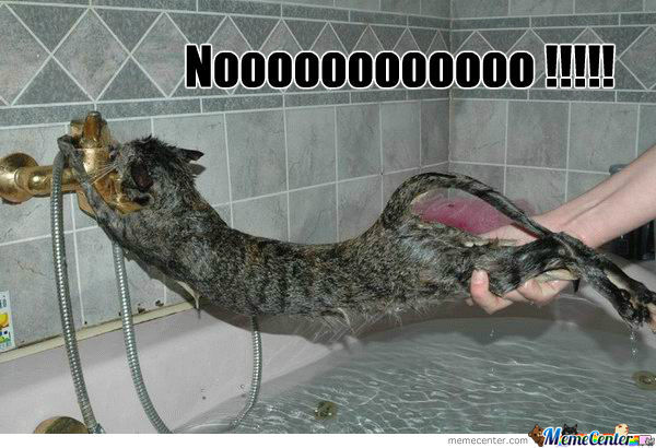 Image result for cat bath meme
