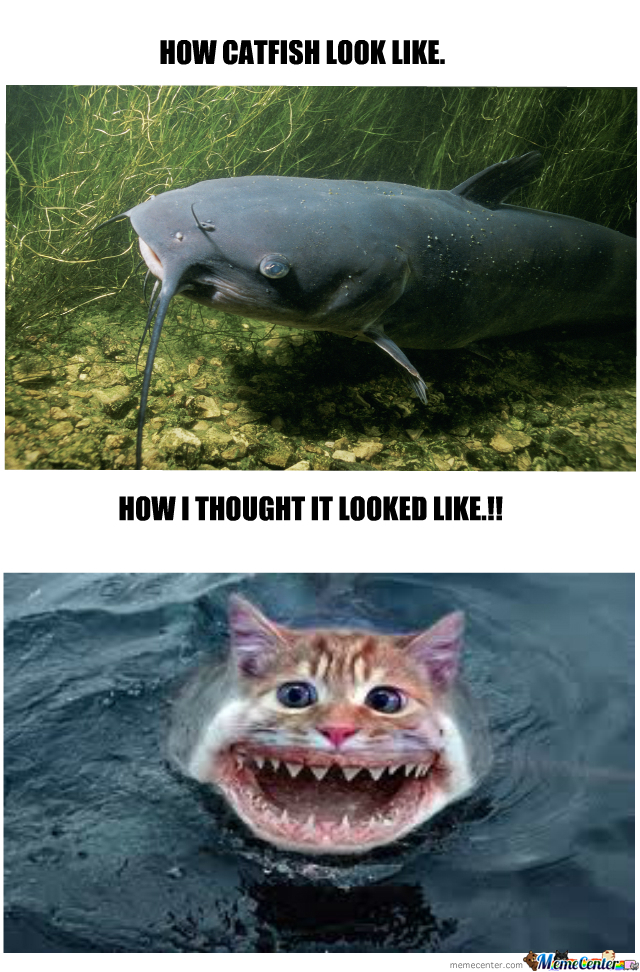 Catfish Memes. Best Collection of Funny Catfish Pictures
