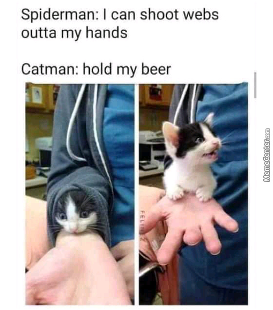 Catman Is Here