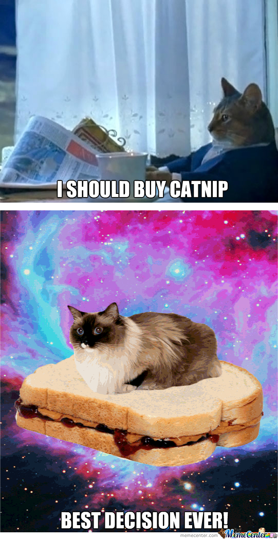 Catnip: Best Decision Ever