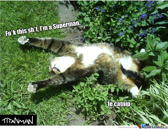 Catnip Gives You Wings.