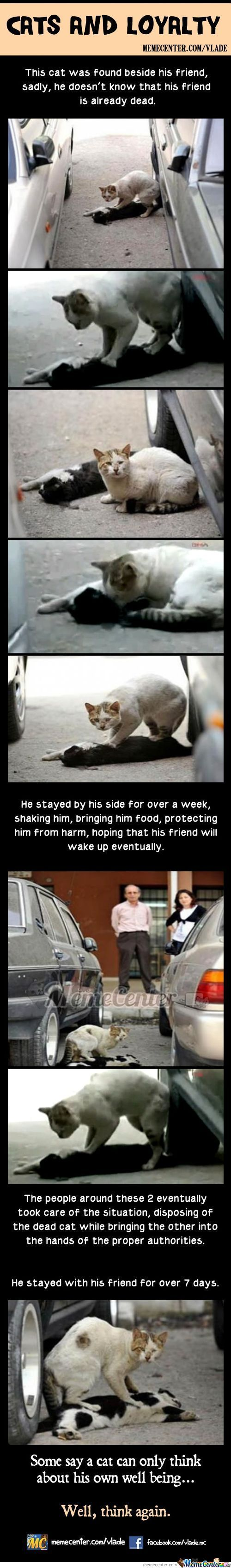 Cats And Loyalty