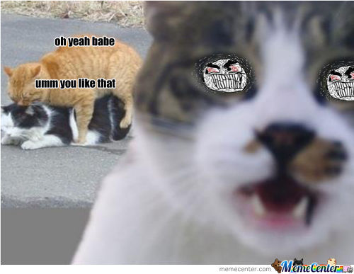 Cats Anger