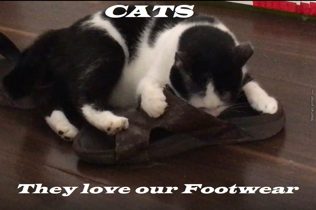 Cats Are Obsessed With Footwear
