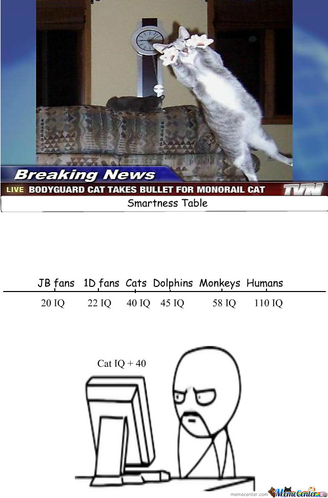Cats Are Smarter Than We Think