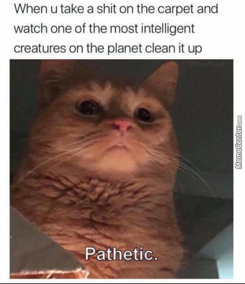 Cats Are The Real Kings Of This Planet