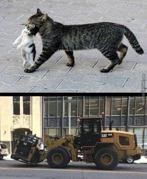 Cats Just Being Cats