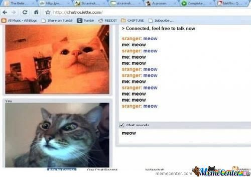 Cats On Omegle