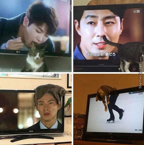 Cats On Tv